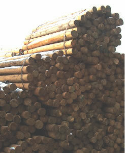 "CCA 4""-5"" x 10' Tapered Wood Post"