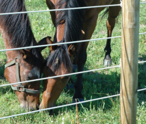 WSWH_WTW_horse_blog